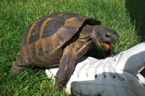 Turtle has sex with shoe – cutest molestation ever