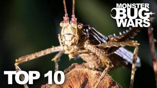 Top Ten Monster Bug War Fights